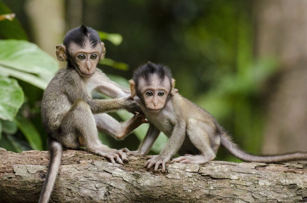interesting facts about the monkeys